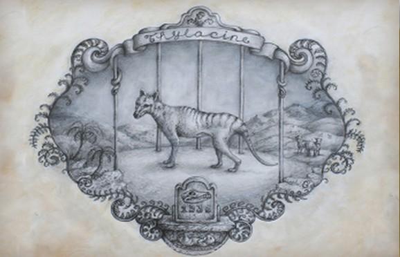 thylacine_card